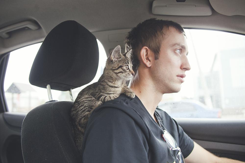 Кошка в авто